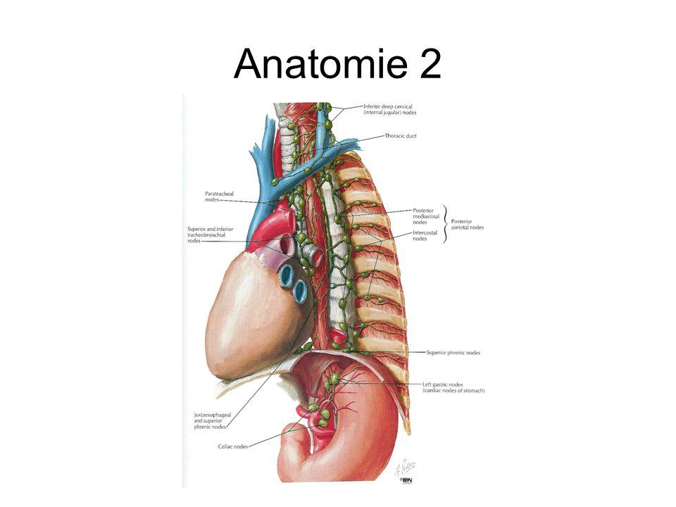 Großartig Innere Halsvene Anatomie Ideen - Anatomie Ideen - finotti.info