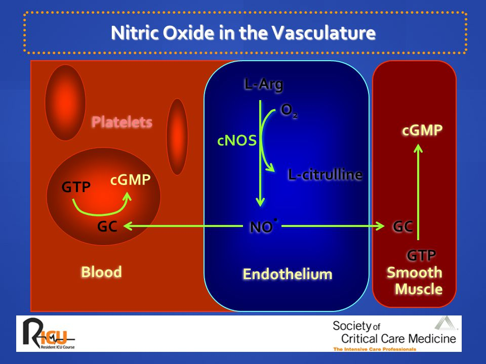 Nitric Oxide in the Vasculature
