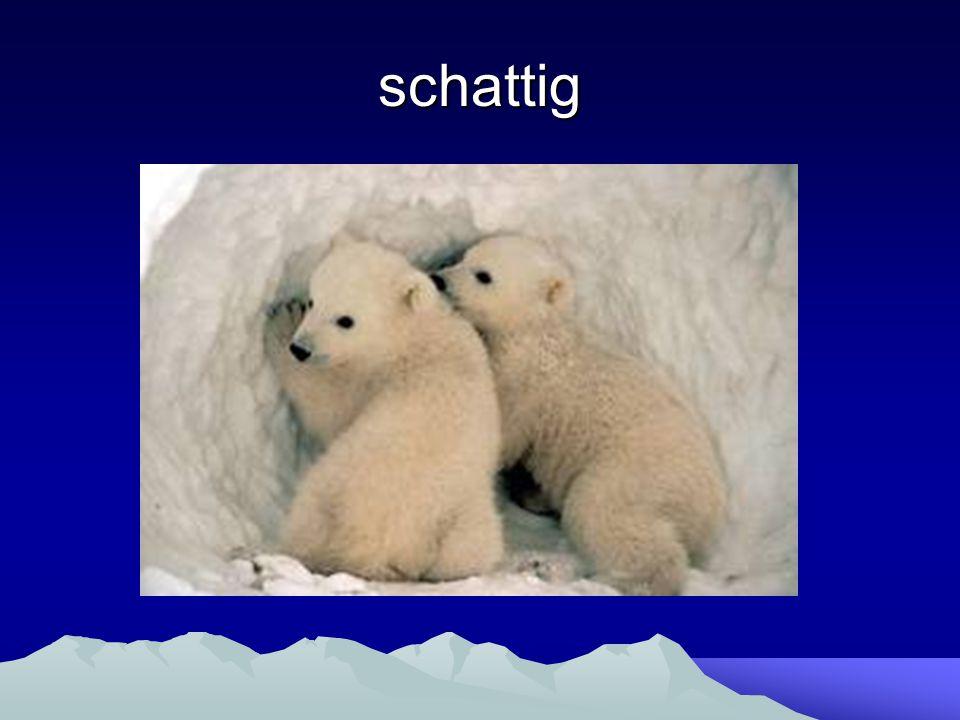 De ijsbeer de ijsbeer. - ppt video online download Panda 500