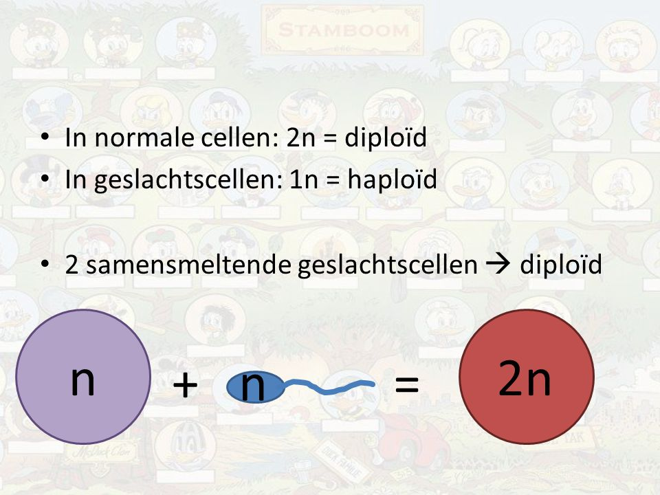 n 2n + n = In normale cellen: 2n = diploïd