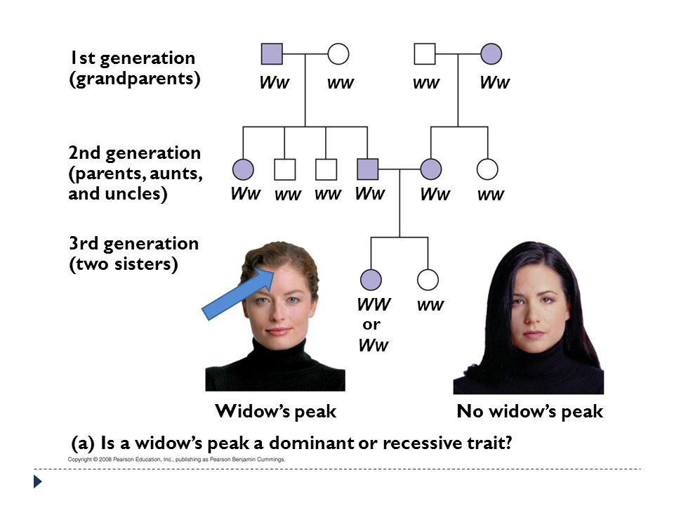 (a) Is a widow's peak a dominant or recessive trait
