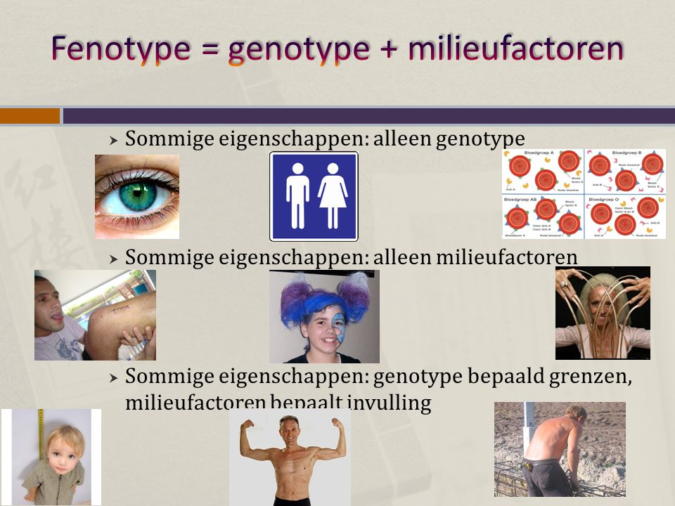 Fenotype = genotype + milieufactoren