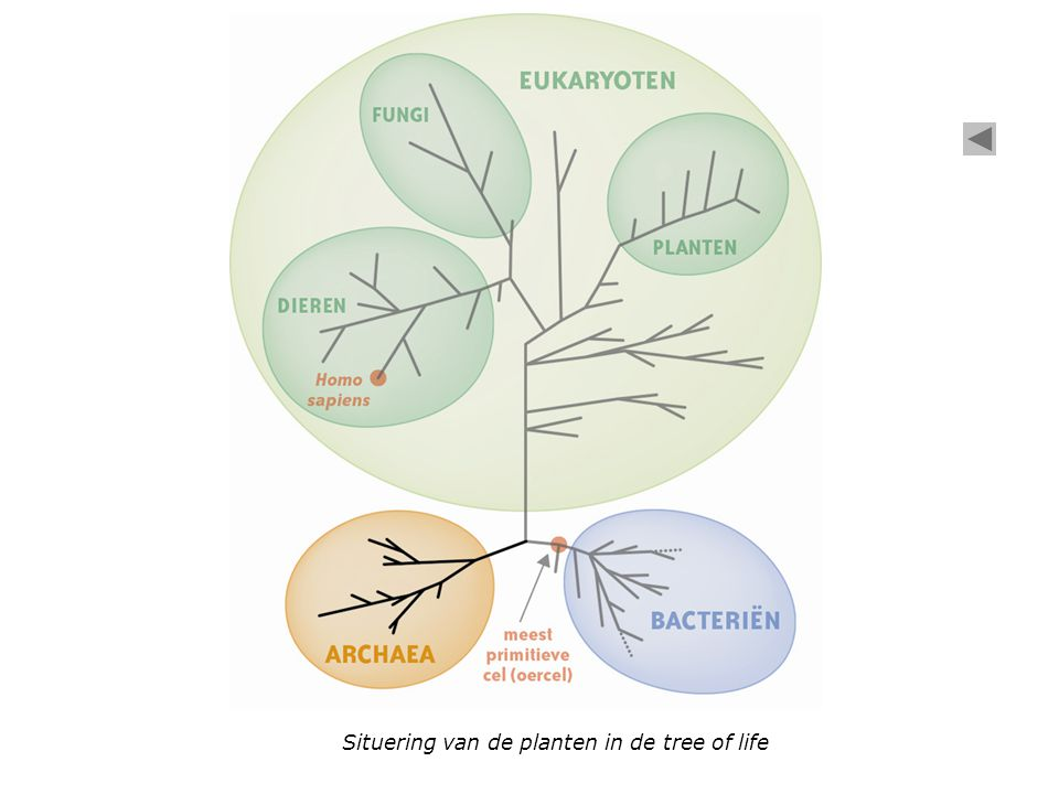 Situering van de planten in de tree of life