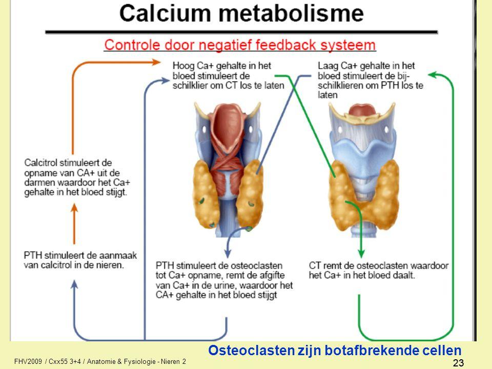 Anatomie / fysiologie Nieren 2 Urine 1 AFI1 - ppt video online download