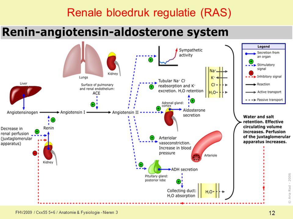 Anatomie / fysiologie Nieren 3 Bloeddruk AFI1 - ppt download
