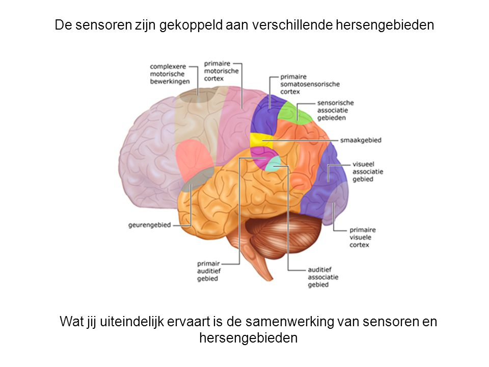 Sensorische Ergonomie - ppt video online download