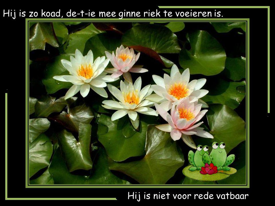 brabantse gezegden en spreuken Brabantse spreuken en gezegden   ppt video online download brabantse gezegden en spreuken