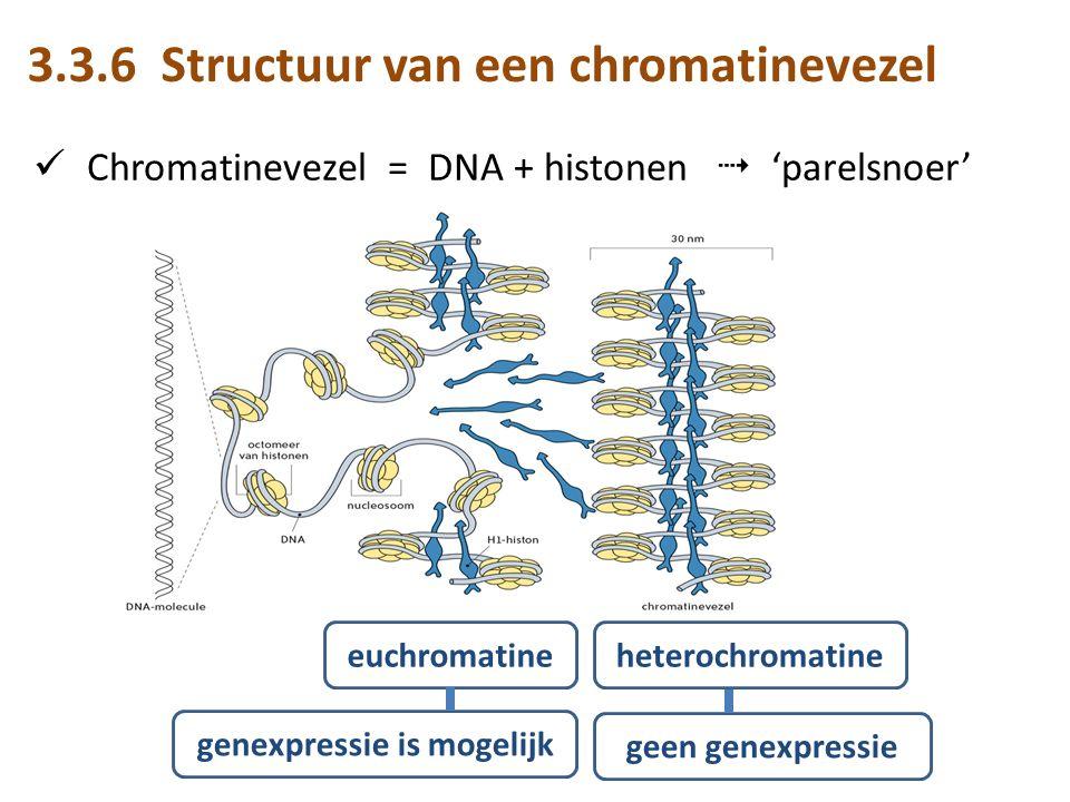 structuur van chromatine en chromosomen