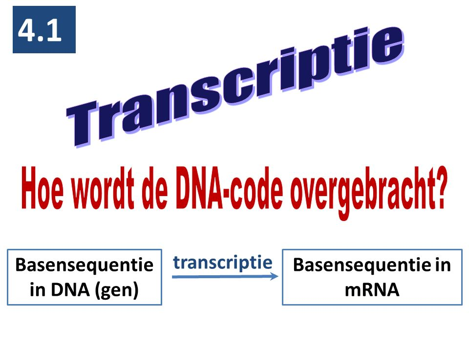 Basensequentie in DNA (gen) Basensequentie in mRNA
