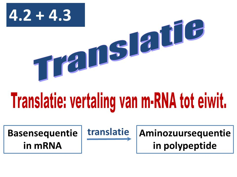 Basensequentie in mRNA Aminozuursequentie in polypeptide