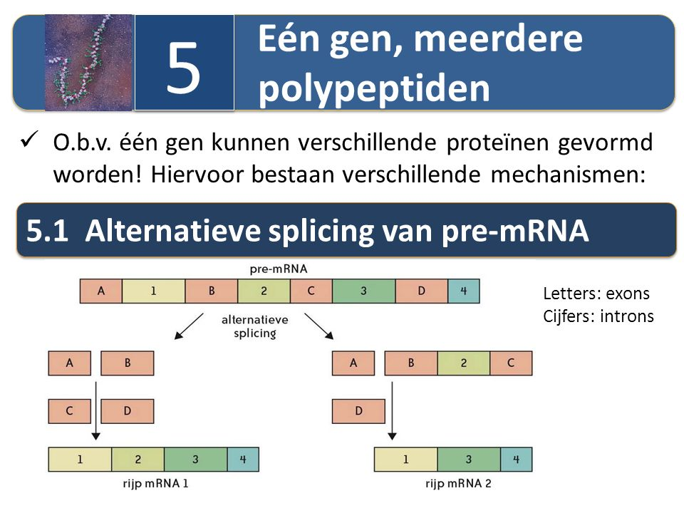 5 5.1 Alternatieve splicing van pre-mRNA