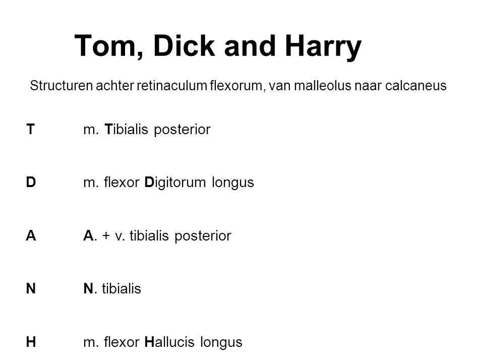 Tom, Dick and Harry T D A N H m. Tibialis posterior